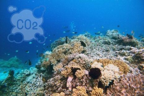 El carbono azul, clave para la crisis del clima