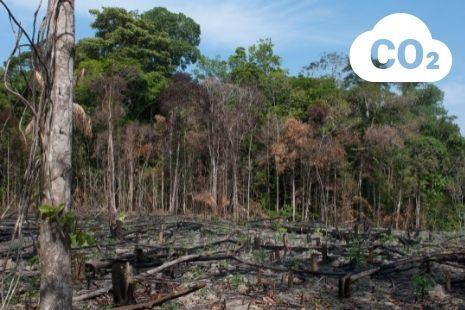 La Amazonía: de pulmón a pozo de CO2
