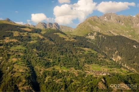 3.000 millones de árboles más en la UE para 2030